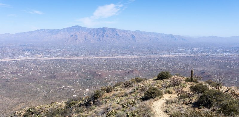 The Santa Catalinas from the summit of Wasson Peak.