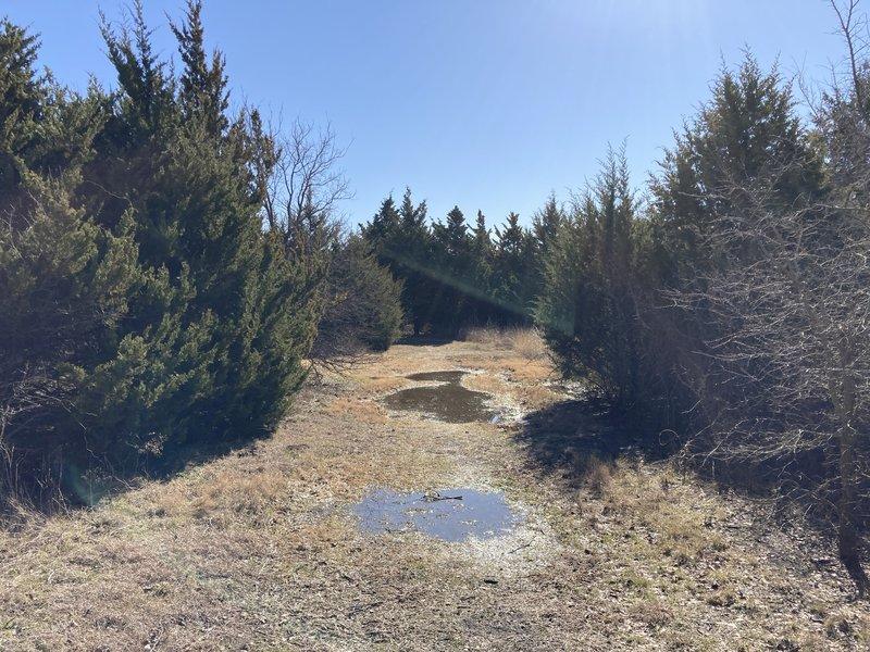 Wet trail in the Juniper Scrub