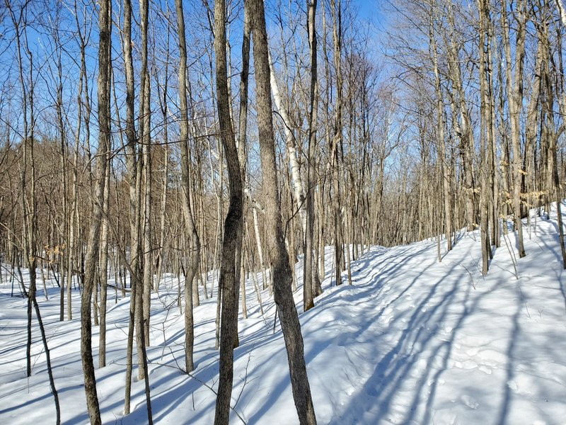 Forested trail in late winter.