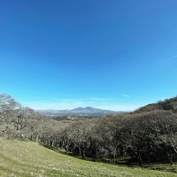 One of the views of Mt. Diablo.