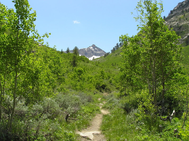 Mt. Fitzgerald appears as you enter Thomas Canyon (06-26-2009)