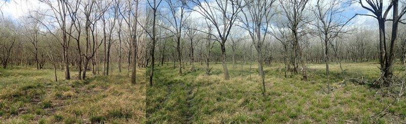 Bear Creek to Chatterton Trail, east of Turkey Creek.