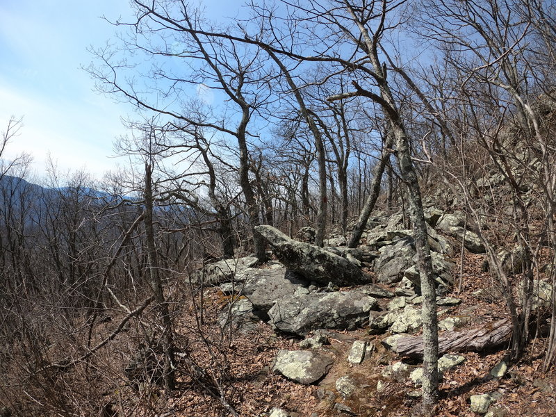 Devil's Knob Trail
