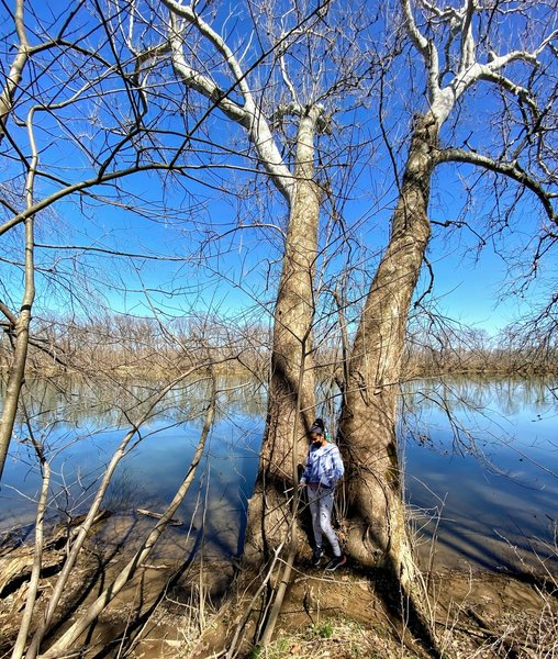 Standing against twin trees on the Potomac River