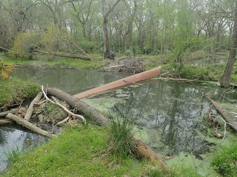 The pipeline - an option for crossing Turkey Creek. It's big enough that it isn't difficult at all to walk across.  The difficulty is dealing with the log jam on the east side. GPS coordinates: 29.81815 -95.58837