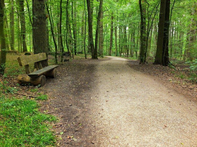 Trail on the Kellerberg.