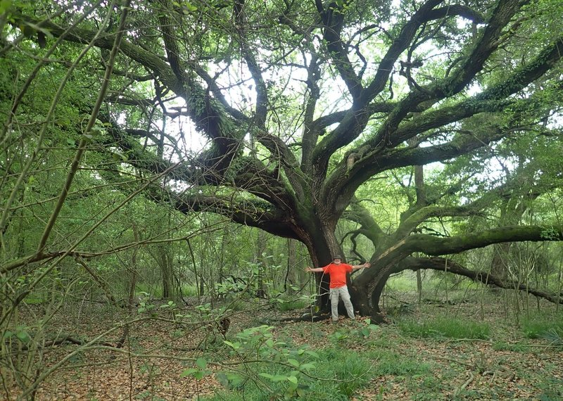 There are some beautiful large oak trees back in here!