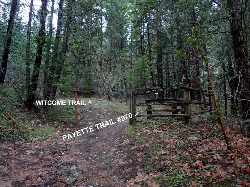 East end of the Witcome Trail