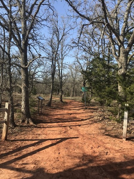 Oak forest with a red clay trail.