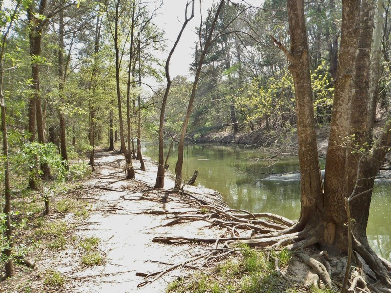 The Langham Creek channel between the dike and Park Row Road.