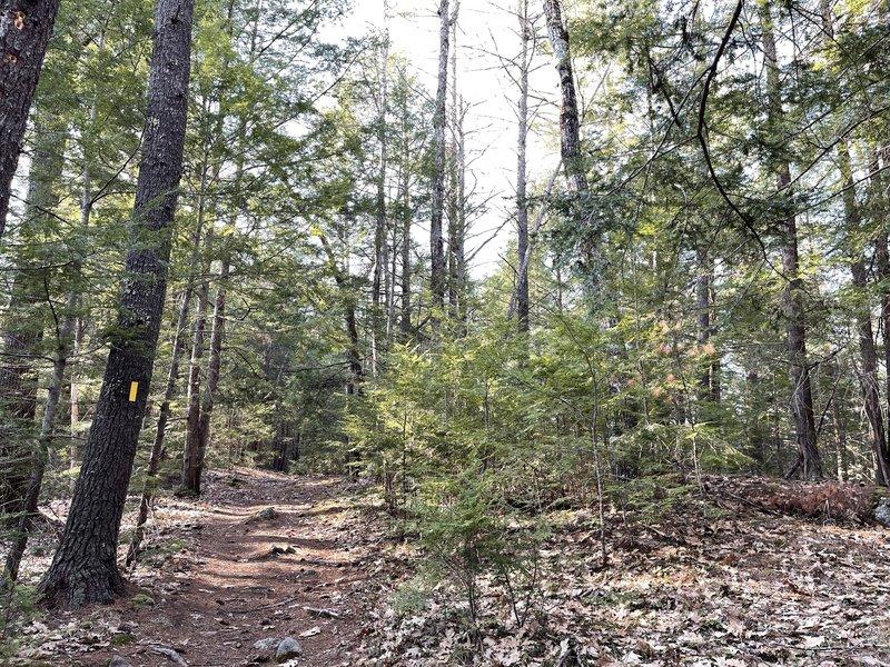Pond Parish Loop Trail