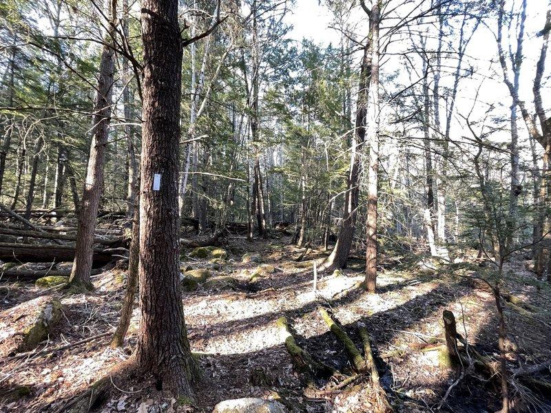 Josiah Parker Trail
