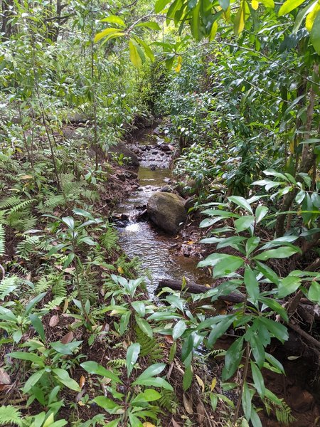 Trickling water on Kaunala Trail; the only sound on our hike.