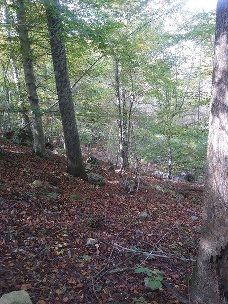 View of Stony Creek