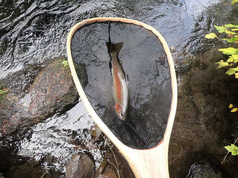 Trout from the Metolius River (9-18-2019)