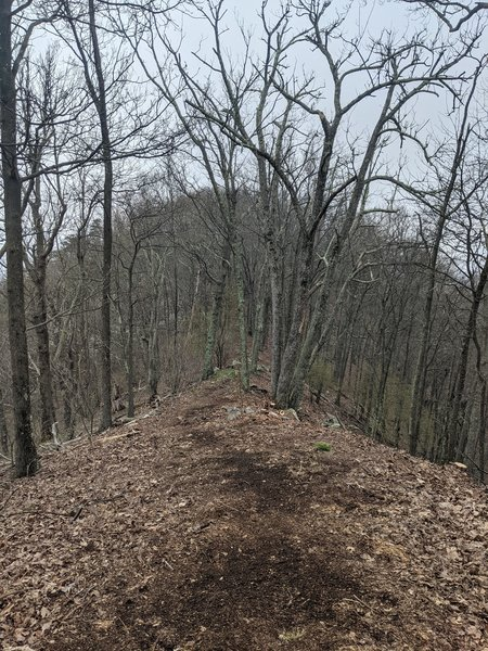 View along Broad Mountain trail