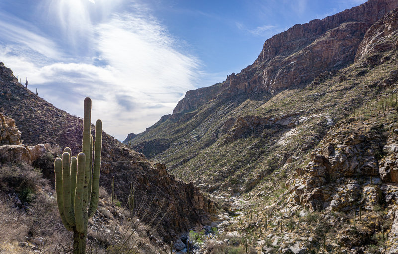 Looking down Bear Canyon from Seven Falls.