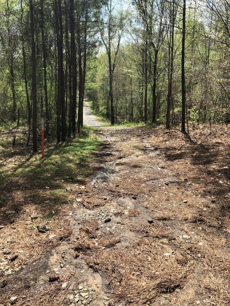 The trail begins as an access road with large gravel pieces. Watch your footing as the gravel tends to roll underfoot.