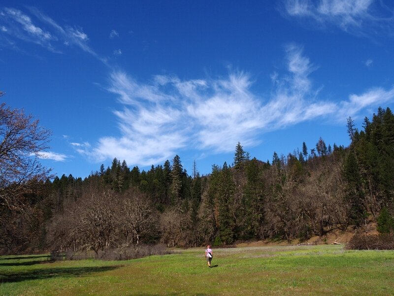 Through one of the meadows (old farm fields) along the Elk Creek Trail.