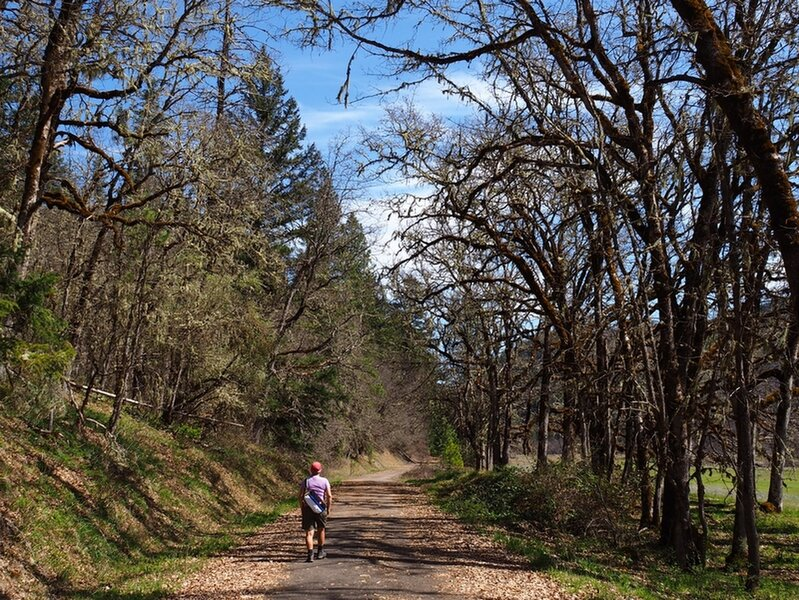 Along the Elk Creek Trail through a gallery of trees.