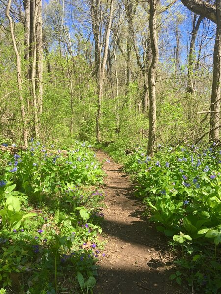 Woodland flowers - April