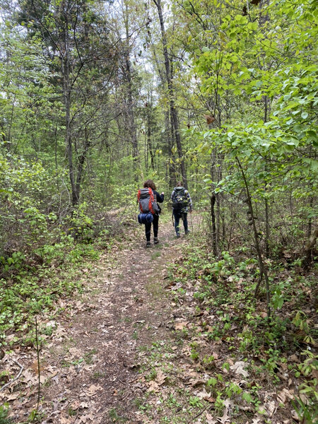Walking through a flatter area of the North/South Trail heading North. Girl scout troop 845 Cadettes want to share images of their hike to help people who are interested in trekking this wonderful trail.