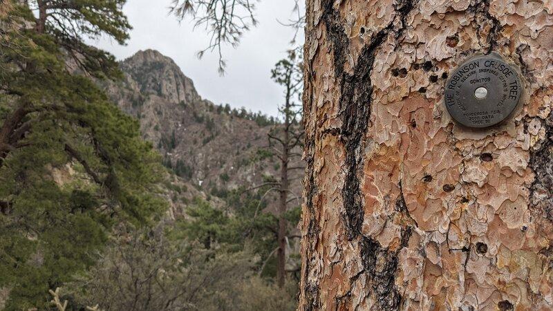 Medallion tree
