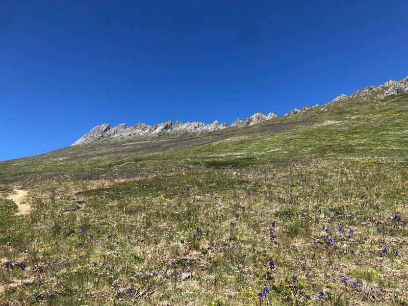 Meadow of Larkspurs