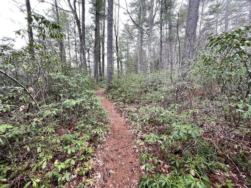 Wildlife Pond Loop Trail