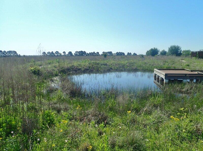 Pond near trailhead