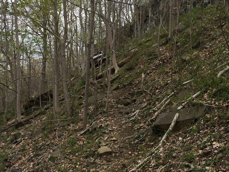 Blue Trail - Happy Earth Day!