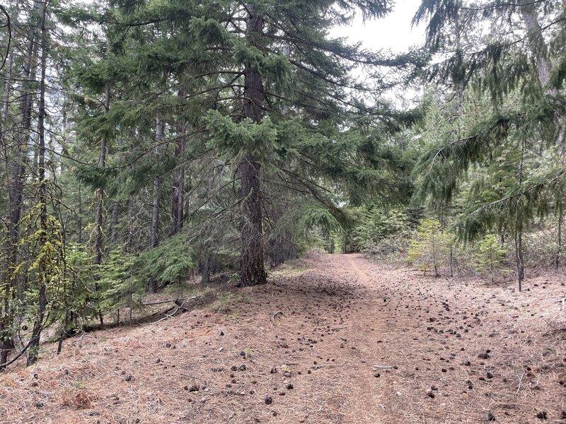 Pretty indicative of the entire trail.