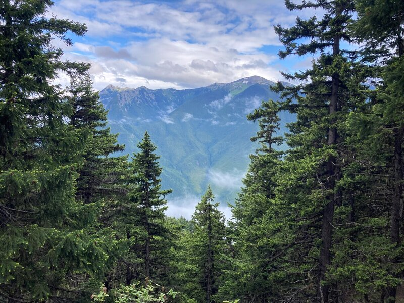 Baldy Ridge framed by trees