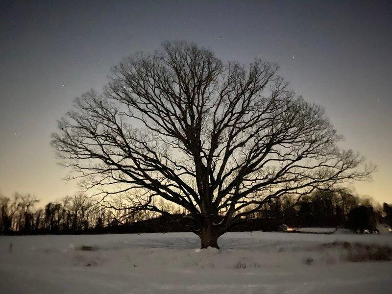 Tree at night.