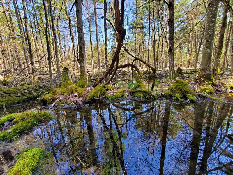 Swampy area at Foley Mountain