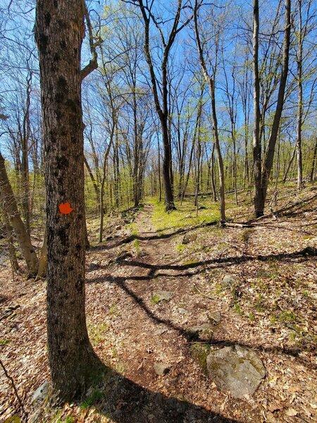 Orange Maple Trail