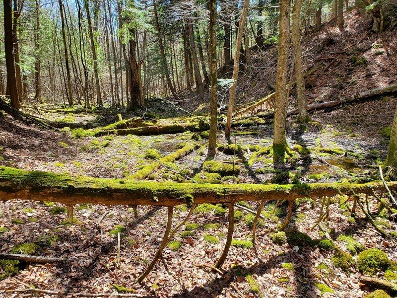 Moss-covered deadfall.