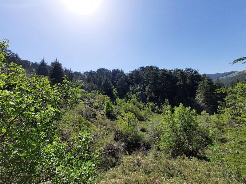 Tannourine Cedar Reserve