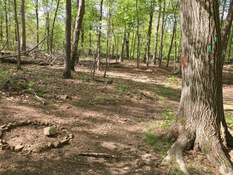 Long Path/Orange Trail junction