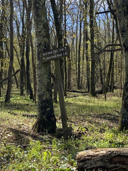 Trail sign at the start of the Bald Knob Trail.