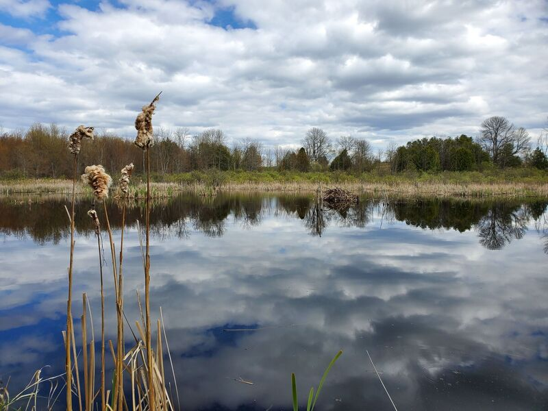 Dramatic clouds reflecting over a wetlands.