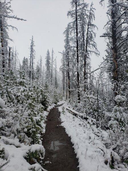Snowy early May morning on Lake Minnewanka Trail.