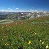 Wildflowers overlook a beautiful vista looking south.