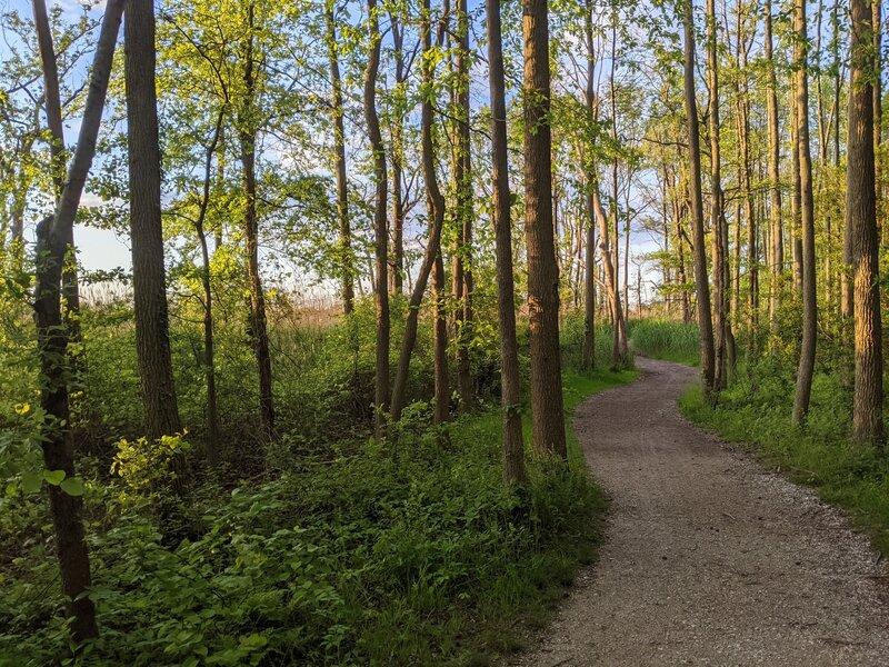 Woodland area in Terrapin Park.