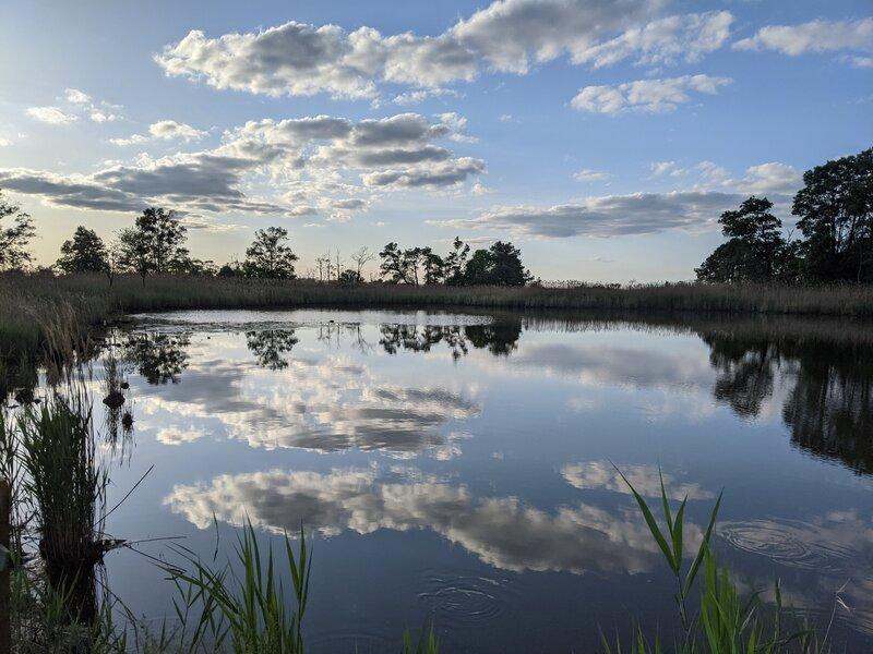 Tidal wetland