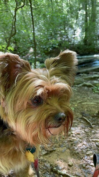 Zoey enjoying the hike.