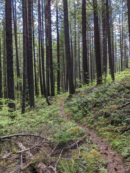 Olallie trail going south.