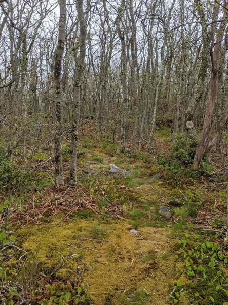Moonstomper Trail