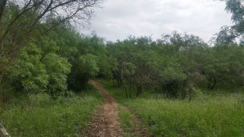 Entrance to Dances with Trees from the Blue Loop (north of Wurzbach).