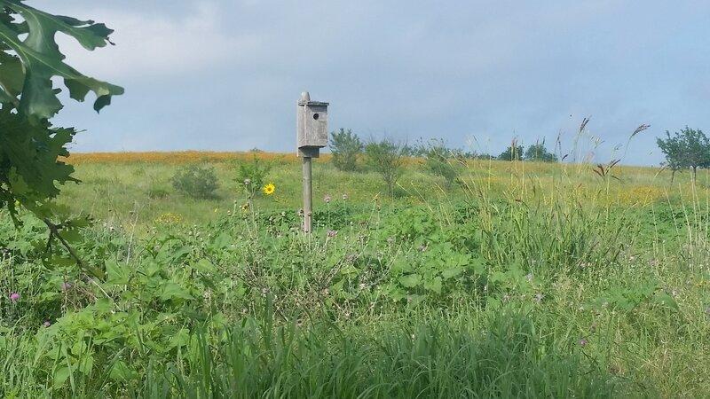 Birdbox and prairie reclamation.